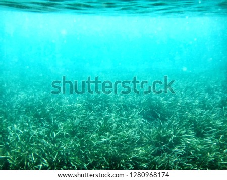 Green algae blue water. Underwater picture