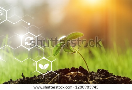 Planted on the field in a bright sunny day. Agriculture, agro-industry. Innovations and technologies. Scientific work and development of new methods and selection of varieties, genetic engineering. #1280983945