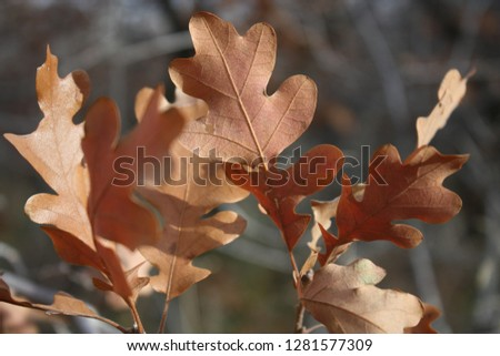 Brown autumn leaves #1281577309