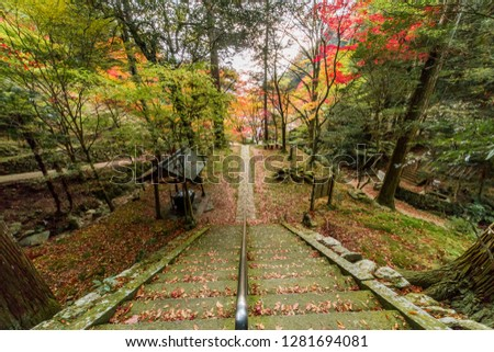 Autumn leaves of the temple #1281694081