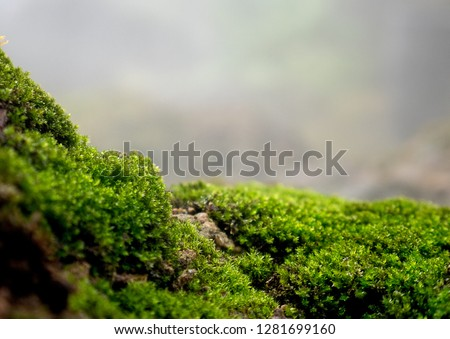 Beautiful green moss on the floor, moss closeup, macro. Beautiful background of moss for wallpaper  #1281699160