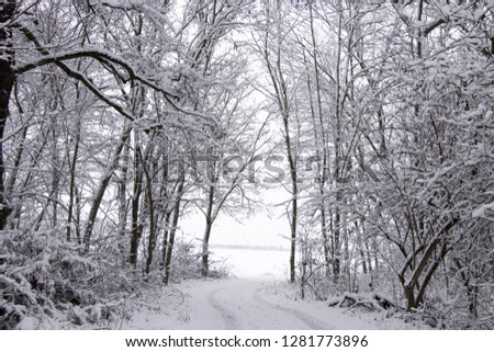 Snow in winter #1281773896