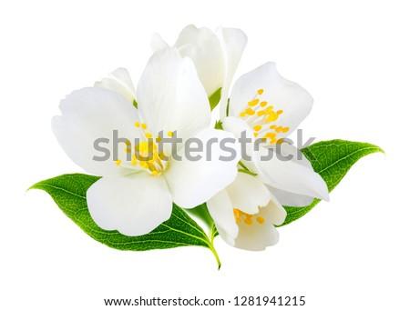 Jasmine flowers isolated on white background #1281941215