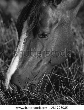 Calm horse portrait in black and white. #1281998035