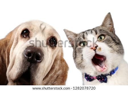 Cat with bow tie and basset hound dog on white background #1282078720