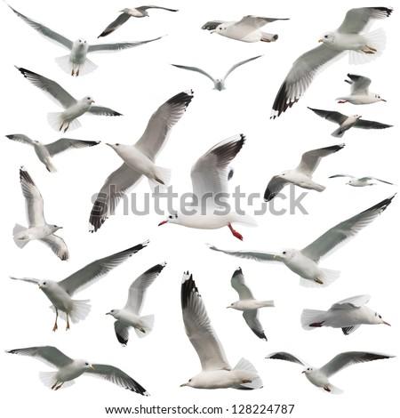 birds set isolated on white Royalty-Free Stock Photo #128224787