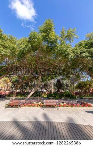 Flowers and spring plants in the Doramas park in Las Palmas de Gran Canaria #1282265386