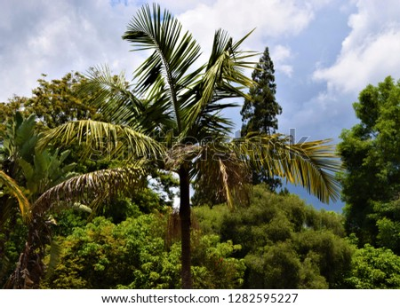 Palm tree closeup garden forest trees #1282595227