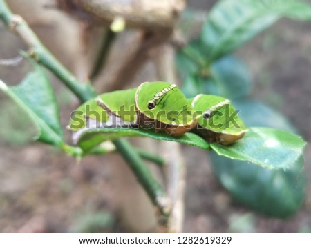 Caterpillar on the green leaf. Close up and blurred for some area background #1282619329