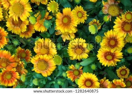 different color flowers as very nice background #1282640875