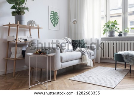 Stylish and minimalistic scandinavian interior with design sofa,tropicla plants, bookstand, coffee table, cozy blanket and carpet. White background walls, brown wooden parquet and modern lamp.  #1282683355