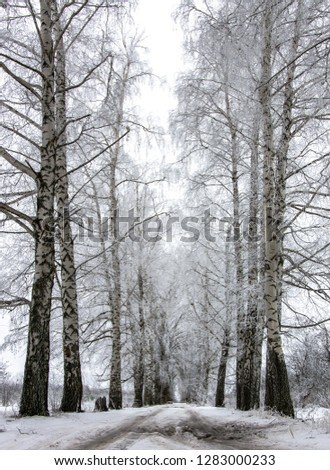 Winter landscape of the road, trees and snow #1283000233