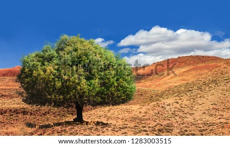 Lonely green argan tree in the middle of the desolating valley in Morocco. Beautiful Northern African Landscape . Fascinating view from the hill to the valley in Morocco #1283003515