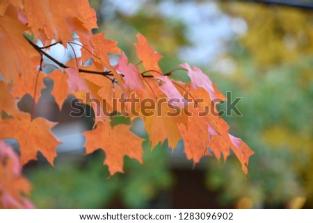 Orange autumn leaves on a green background #1283096902