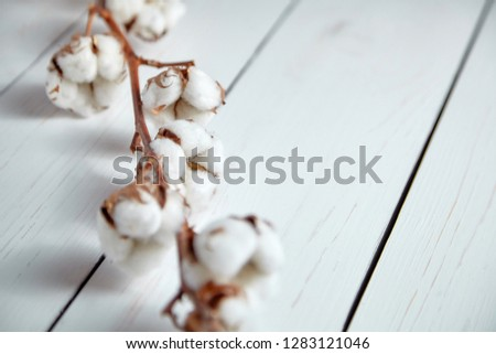 A branch of soft cotton flowers is lying on a white wooden table #1283121046