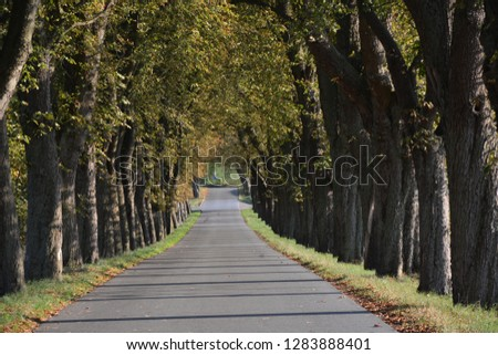 the tree avenue Tree avenue #1283888401