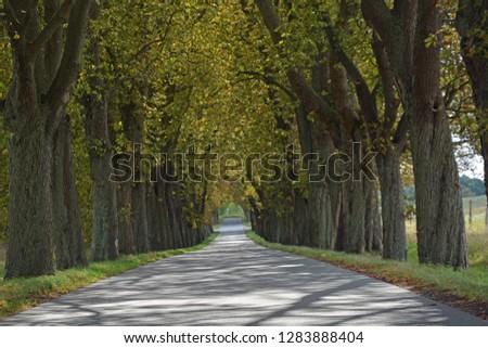 the tree avenue Tree avenue #1283888404