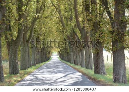 the tree avenue Tree avenue #1283888407