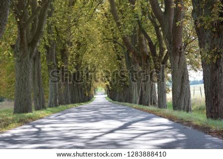 the tree avenue Tree avenue #1283888410