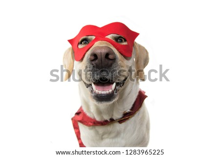 DOG SUPER HERO COSTUME. LABRADOR CLOSE-UP WEARING A RED MASK AND A CAPE.  CARNIVAL OR HALLOWEEN. ISOLATED STUDIO SHOT AGAINST WHITE BACKGROUND. Royalty-Free Stock Photo #1283965225