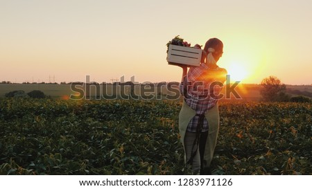 Rear view: A female farmer with a box of fresh vegetables walks along her field. Healthy Eating and Fresh Vegetables #1283971126