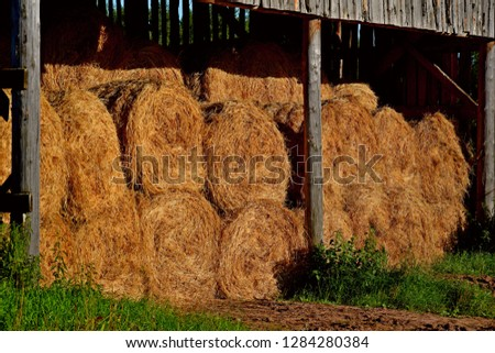Dry baled hay bales stack, rural countryside straw background. Hay bales straw storage shed full of bales hay on agricultural farm. Rural land cowshed farm with hay straw bales stack under old shed #1284280384