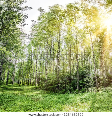 Summer park panorama. Ecology plants outdoor background #1284682522