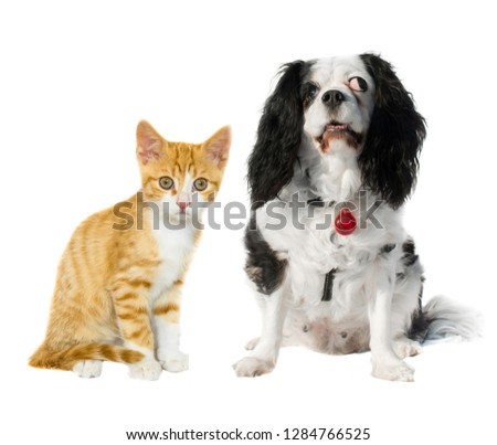 Cats and dogs are friends #1284766525