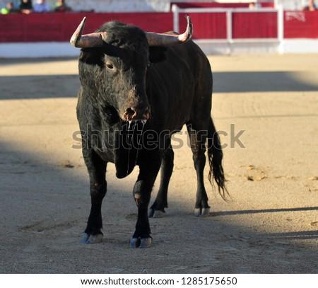 spanish bull black in spain #1285175650