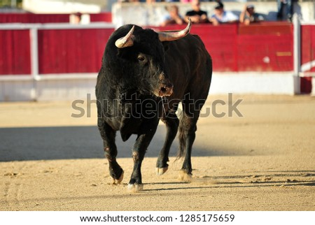 spanish bull black in spain #1285175659