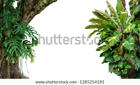 Nature frame of jungle trees with tropical rainforest foliage plants (Monstera, bird's nest fern, golden pothos and forest orchid) growing in wild isolated on white background with clipping path. #1285254181