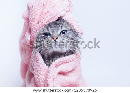 Funny smiling wet gray tabby cute kitten after bath wrapped in pink towel with blue eyes. Pets and lifestyle concept. Just washed lovely fluffy cat with towel around his head on grey background. #1285398925