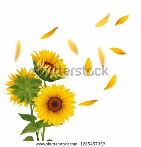 Sunflower bouquet illustration  #1285457359