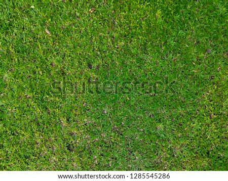 Top view of grass in the garden. #1285545286