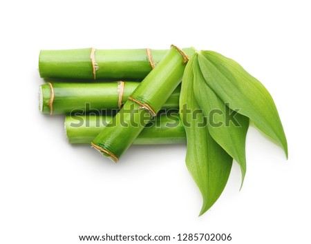 Branches of bamboo isolated on white background #1285702006