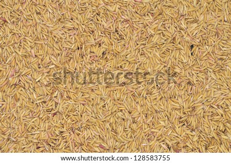 stock image of the unprocessed rice #128583755
