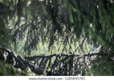 Heavy rain in the forest.Spring natural background. #1285845781