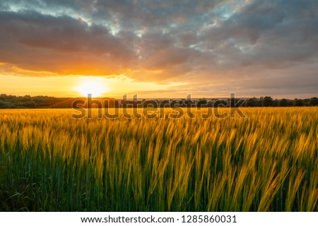 The sunset over wheat field in Germany . #1285860031