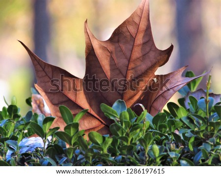 The magical beauty of the leaves in autumn colors #1286197615