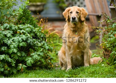 Portrait of a dog sitting in a garden surrounded by lush foliage. #1286291272