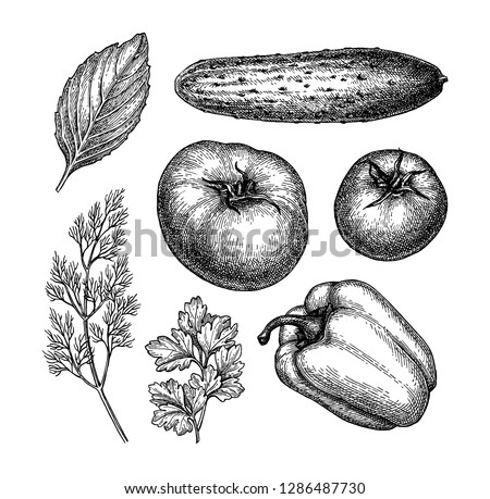 Vegetables set. Ink sketch isolated on white background. Hand drawn vector illustration. Retro style. #1286487730