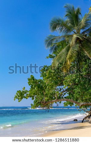 Tropical beach paradise - sand, blue ocean, coconut palm, Sri Lanka, travel destination 2019 #1286511880