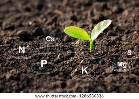 The seedlings are growing from the rich soil and have an icon attached to the nutrients necessary for plant growth. #1286536336