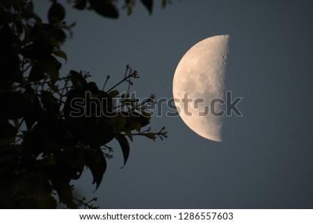 Half Moon Spring #1286557603