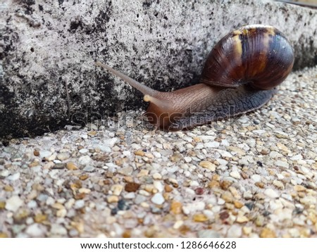 Snails walking on the road #1286646628