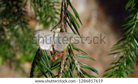 White butterfly on a pine twig #1286817619