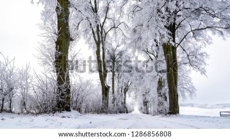 snowy alley in Masuria in eastern Poland in Winter #1286856808