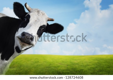 Funny cow on a green summer meadow. Blurred background Royalty-Free Stock Photo #128724608