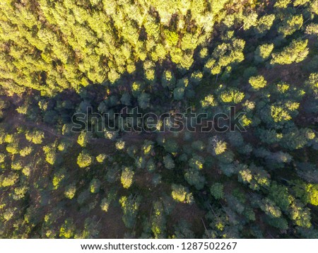 Aerial Drone veiw pine forests. Background of lit trees. Calm and serenity. Wood industry. Environmental and scientific communication. Pest and climate change. Location: Barcelona, Catalonia, Europe. #1287502267