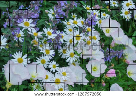 Field of wild flower with tile lines or cut outs added to photo.